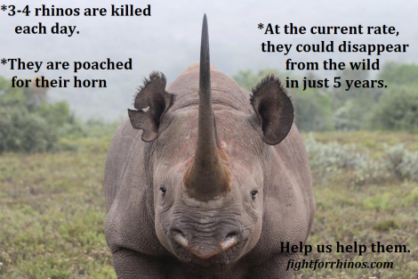 rhino-facts