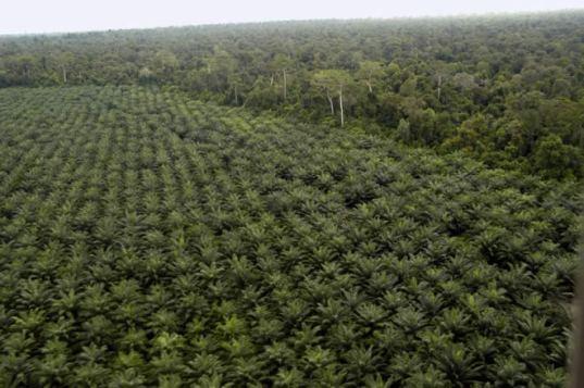palm-oil-plantation