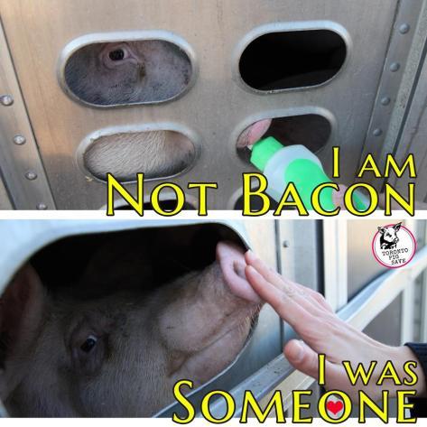 pig-save-photo