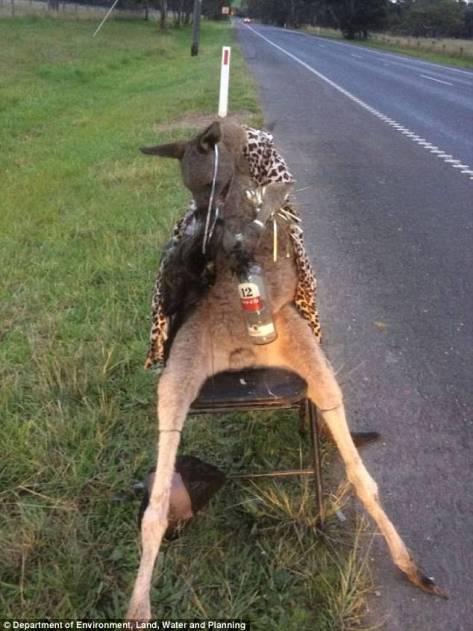 kangaroo_tortured_australia