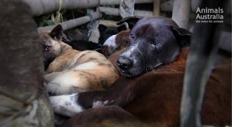 sad-dogs